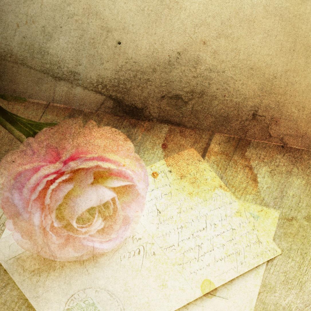 The Rose courtesy of Kai Stachowiak