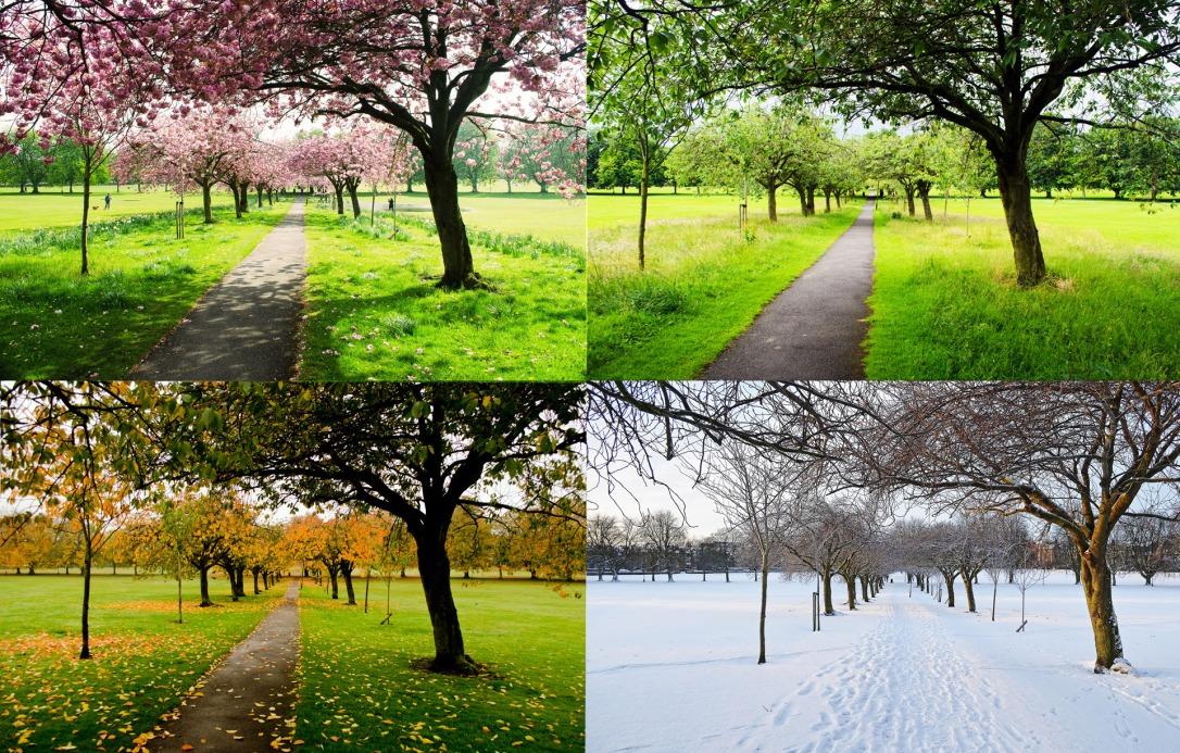 the-four-seasons via George Hodan